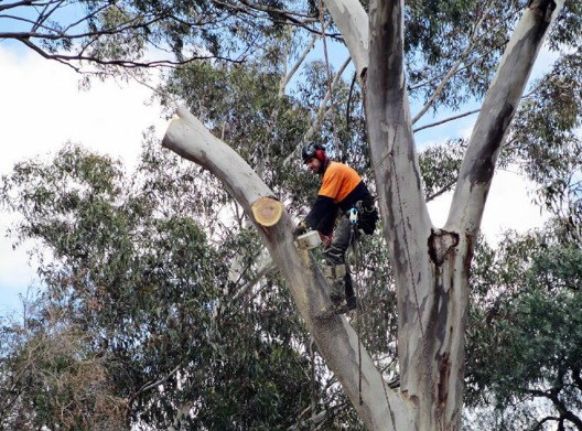 Tree Lopping Campbell